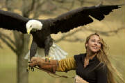 eagle_handler.jpg-euro-quest-night-life-rmc.jpg